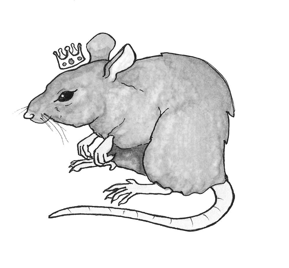 rey de las rata